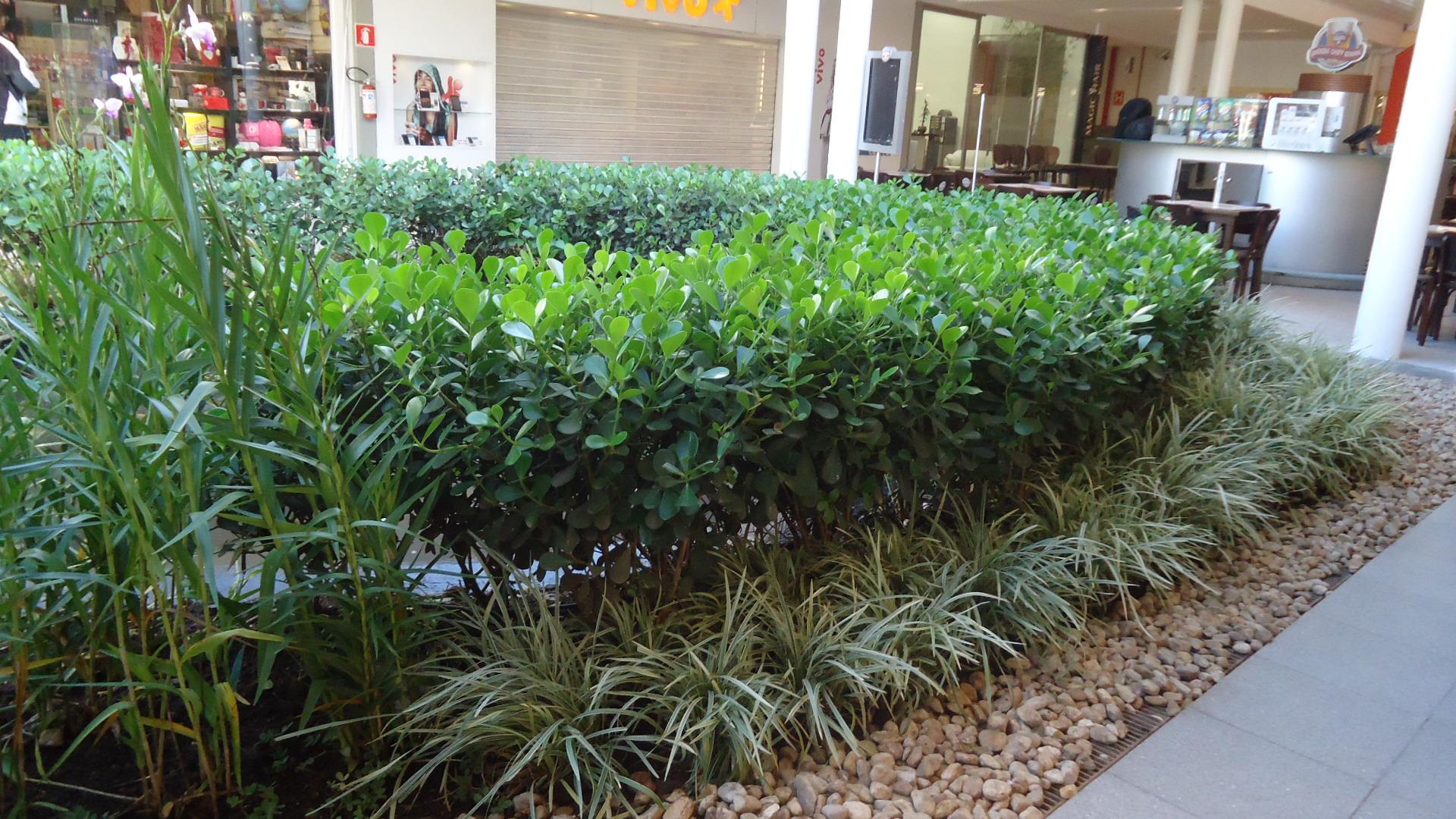 Pin Jardins-paisagismo-residenciais-plantas-cultura-mix ...